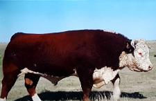 Price Charles Pole Cattle bull